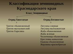 Классификация земноводных Краснодарского края Класс Земноводные ОтрядХвостаты