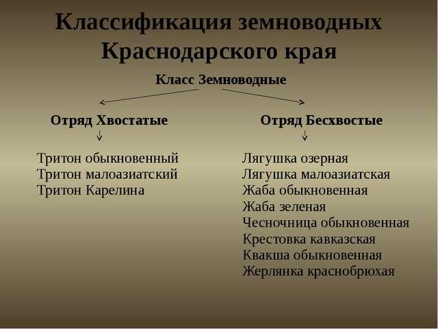 Классификация земноводных Краснодарского края Класс Земноводные ОтрядХвостаты...