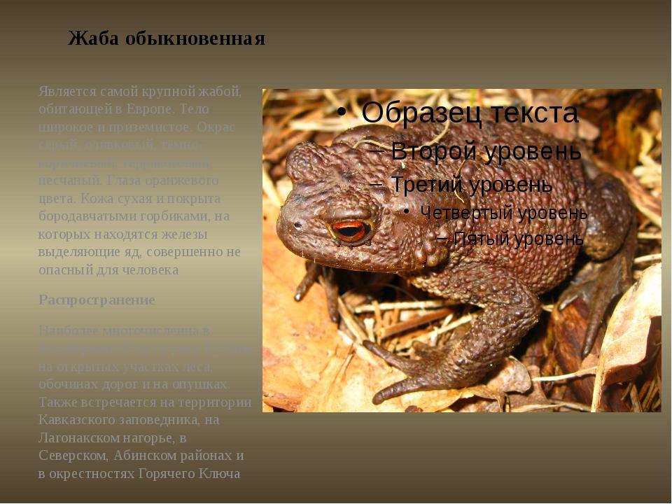 Жаба обыкновенная Является самой крупной жабой, обитающей в Европе. Тело широ...