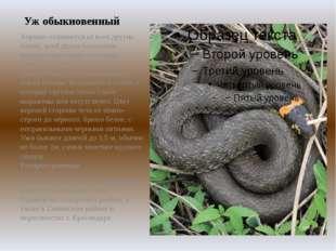 Уж обыкновенный Хорошо отличается от всех других наших змей двумя большими, х