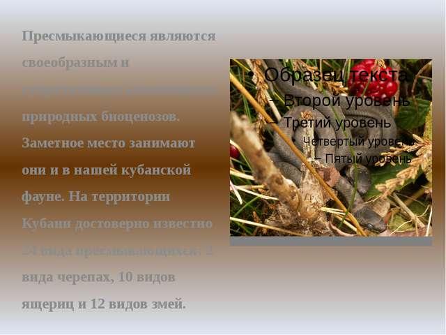 Пресмыкающиеся являются своеобразным и существенным компонентом природных био...