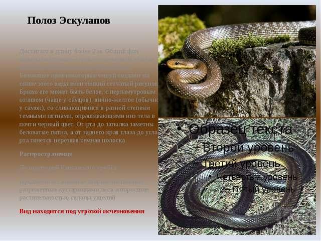 [маршруты карте], ядовитые змеи обитающие в краснодарском крае ценители прекрасного, хороших