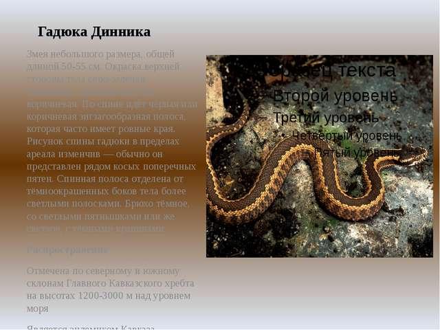 Гадюка Динника Змея небольшого размера, общей длиной 50-55 см. Окраска верхне...