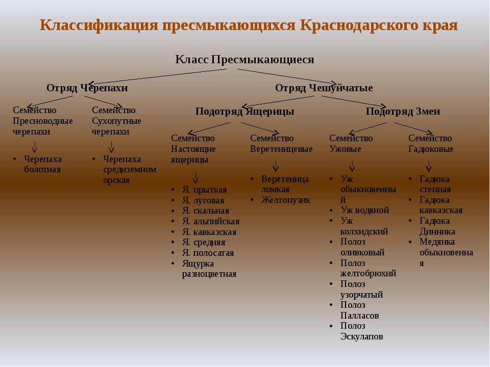 Классификация пресмыкающихся Краснодарского края Класс Пресмыкающиеся ОтрядЧе...