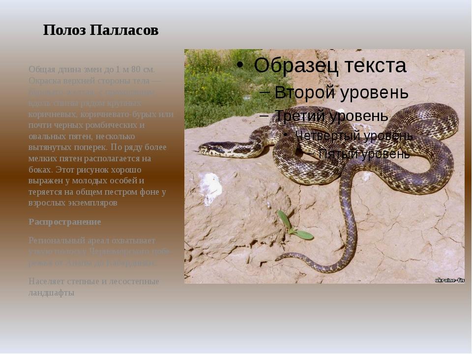 Полоз Палласов Общая длина змеи до 1 м 80 см. Окраска верхней стороны тела —...