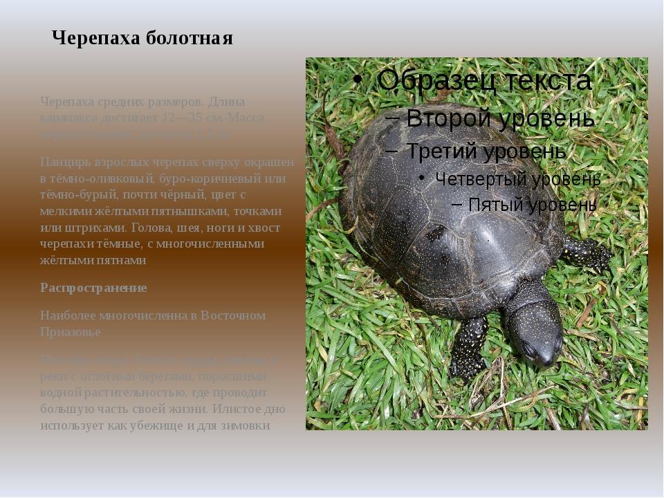 Черепаха болотная Черепаха средних размеров. Длина карапакса достигает 12—35...