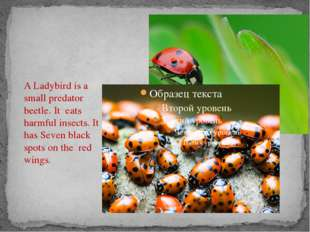 A Ladybird is a small predator beetle. It eats harmful insects. It has Seven