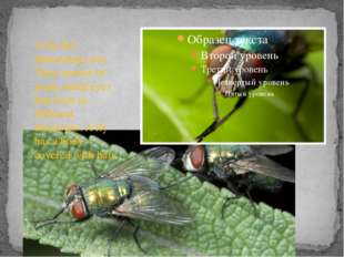 A fly has interesting eyes. They consist of many small eyes that look in dif