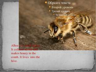 ABee is a small insect. It collects nectar and makes honey in the comb. It l