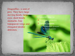 Dragonflies is unit of prey. They have large moving-heads, large eyes, short