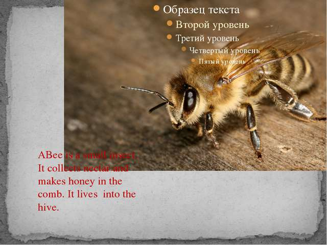 ABee is a small insect. It collects nectar and makes honey in the comb. It l...