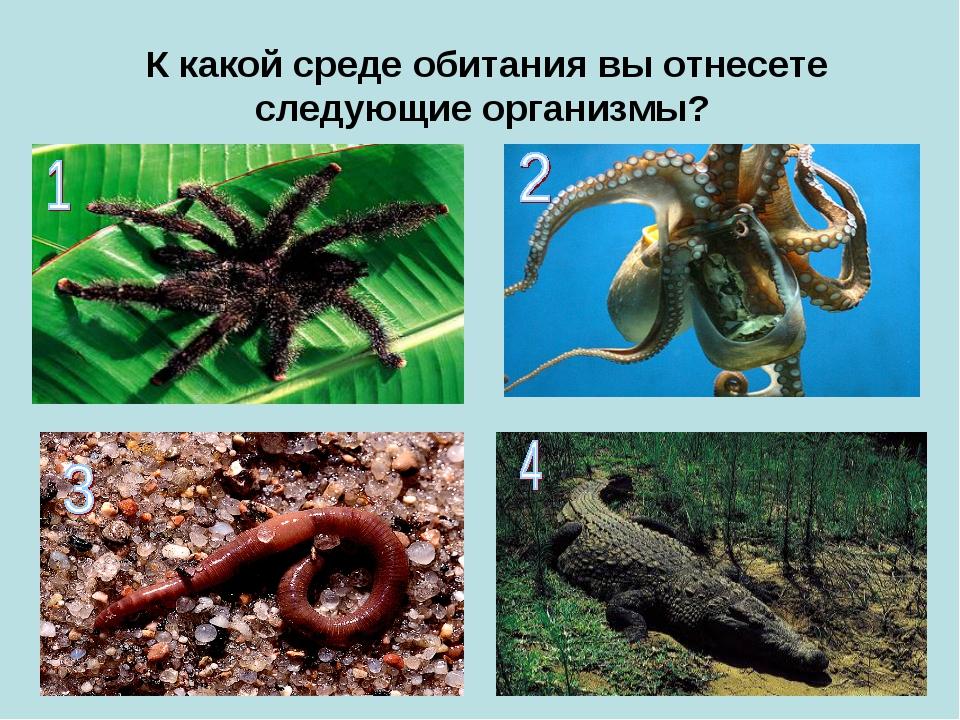 К какой среде обитания вы отнесете следующие организмы?