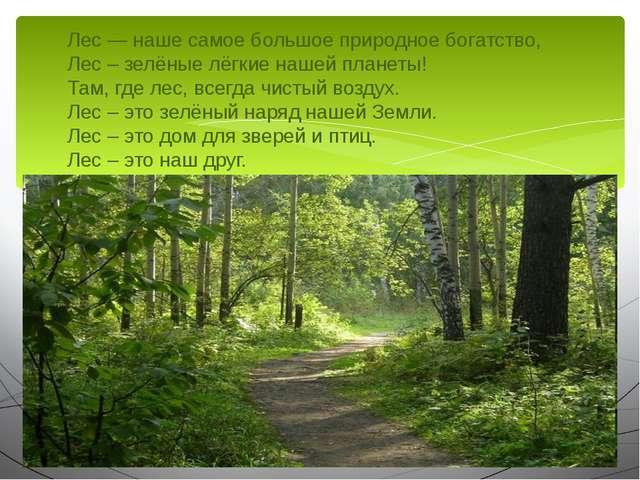 Лес — наше самое большое природное богатство, Лес – зелёные лёгкие нашей план...