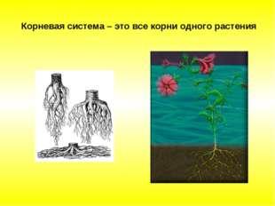 Корневая система – это все корни одного растения