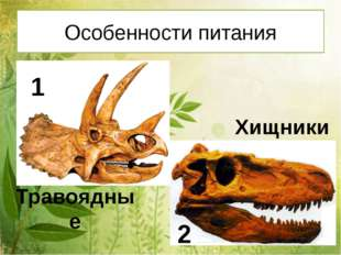 Особенности питания Травоядные Хищники 1 2