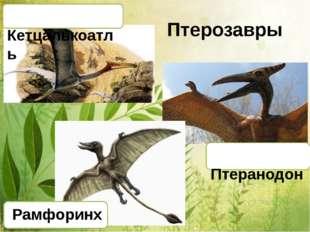 Птерозавры Рамфоринх Кетцалькоатль Птеранодон