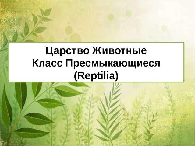 Царство Животные Класс Пресмыкающиеся (Reptilia)