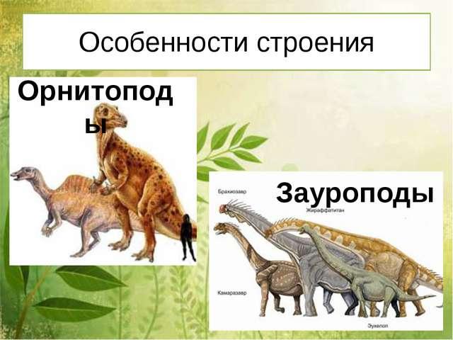 Особенности строения Орнитоподы Зауроподы