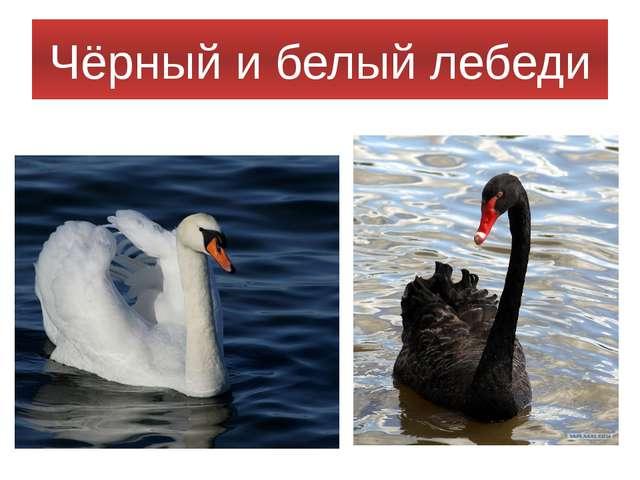 Чёрный и белый лебеди