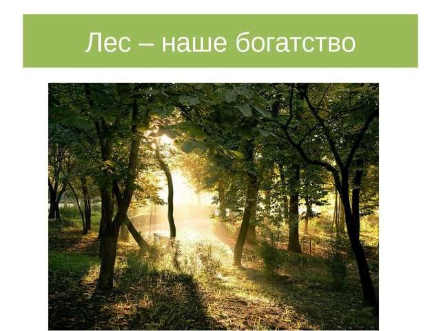 Лес – наше богатство