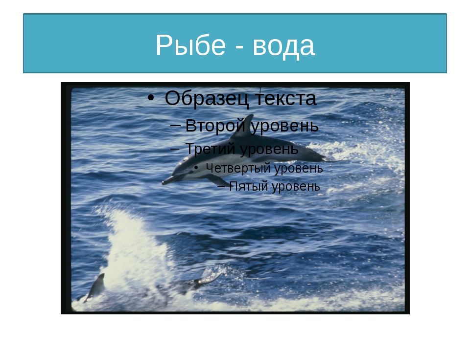 Рыбе - вода