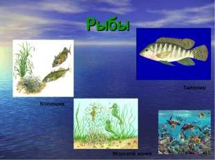 Рыбы Морской конек Колюшка Тиляпия