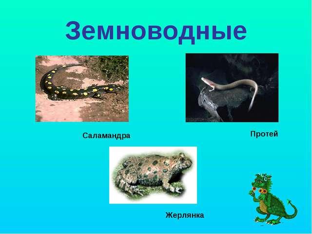 Земноводные Протей Жерлянка Саламандра