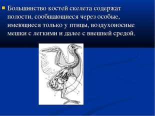 Большинство костей скелета содержат полости, сообщающиеся через особые, имеющ