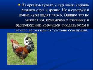Из органов чувств у кур очень хорошо развиты слух и зрение. Но в сумерки и но