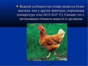 Важной особенностью птицы является более высокая, чем у других животных, норм