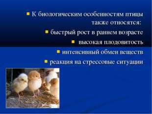 К биологическим особенностям птицы также относятся: быстрый рост в раннем воз