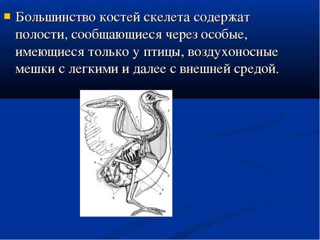 Большинство костей скелета содержат полости, сообщающиеся через особые, имеющ...