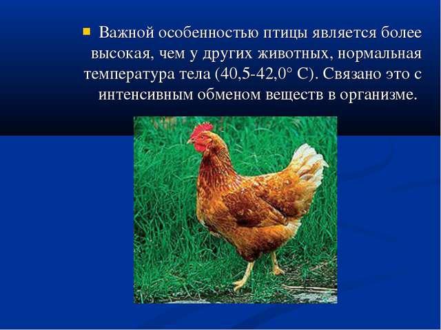 Важной особенностью птицы является более высокая, чем у других животных, норм...