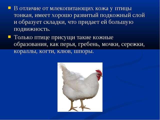 В отличие от млекопитающих кожа у птицы тонкая, имеет хорошо развитый подкожн...
