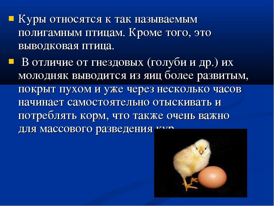 Куры относятся к так называемым полигамным птицам. Кроме того, это выводковая...