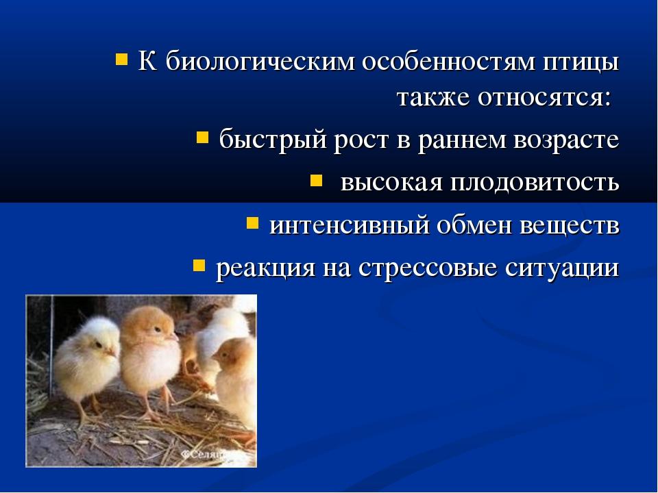К биологическим особенностям птицы также относятся: быстрый рост в раннем воз...