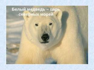 Белый медведь – царь северных морей