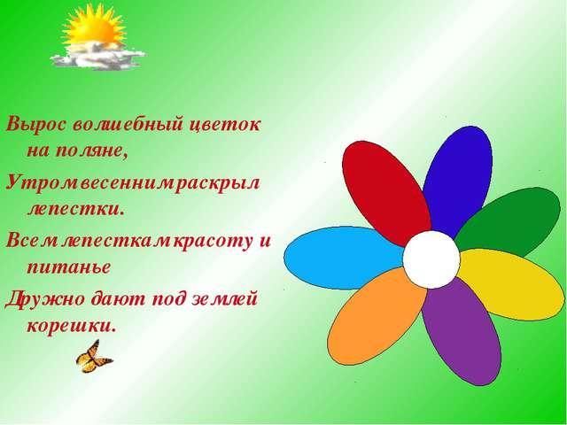 Вырос волшебный цветок на поляне, Утром весенним раскрыл лепестки. Всем лепес...