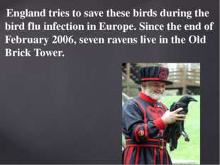 England tries to save these birds during the bird flu infection in Europe. S