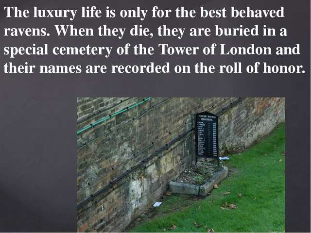 The luxury life is only for the best behaved ravens. When they die, they are...