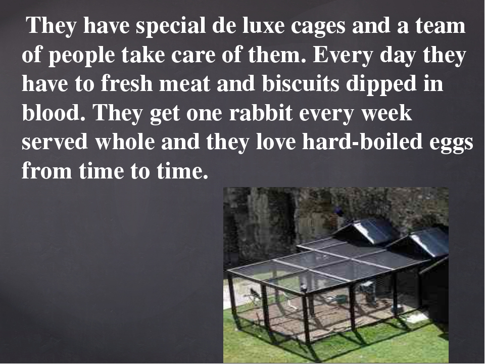 They have special de luxe cages and a team of people take care of them. Ever...