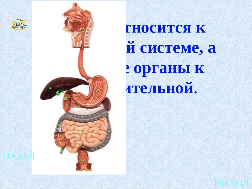 Коала 4 1 2 3 Жираф Панда Муравьед выход