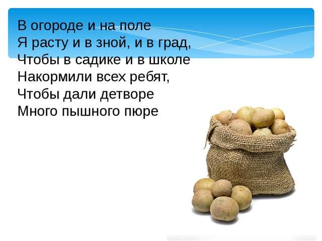 В огороде и на поле Я расту и в зной, и в град, Чтобы в садике и в школе Нако...