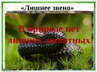 «Лишнее звено» В природе нет лишних животных!