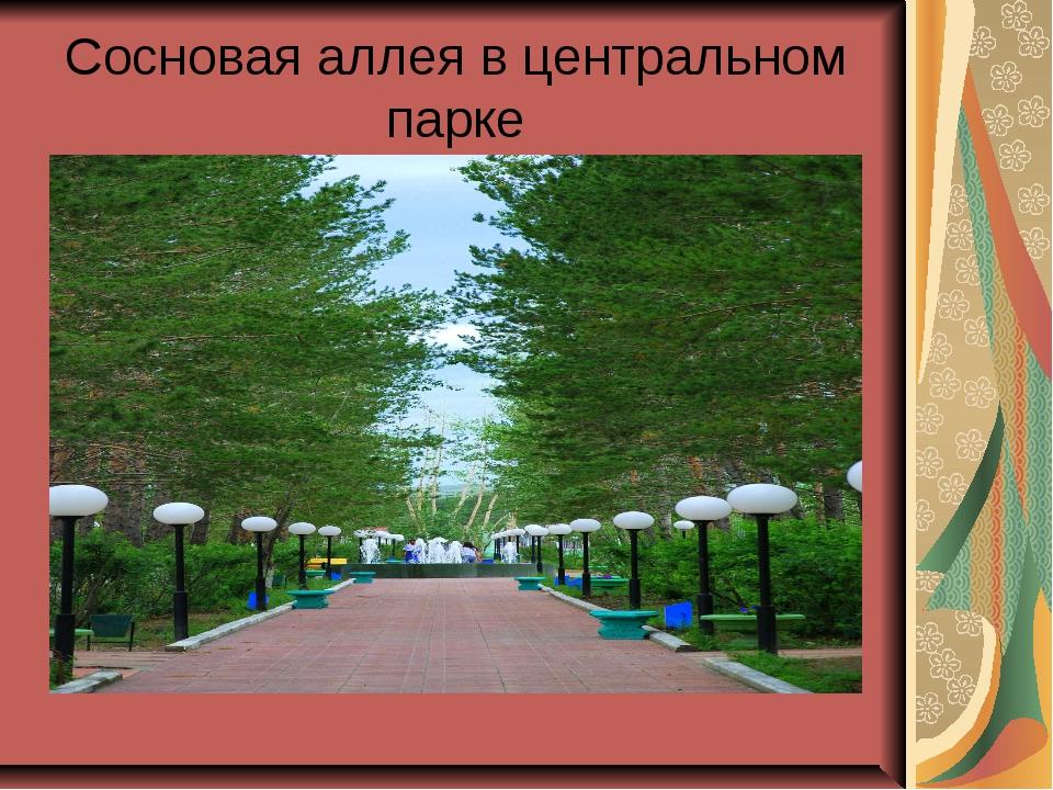 Сосновая аллея в центральном парке