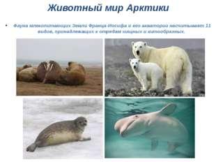 Животный мир Арктики Фауна млекопитающих Земли Франца-Иосифа и его акватории