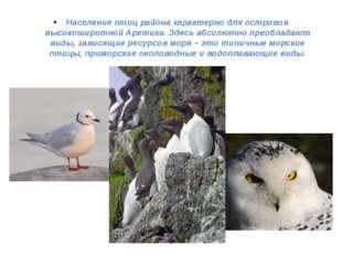 Население птиц района характерно для островов высокоширотной Арктики. Здесь а