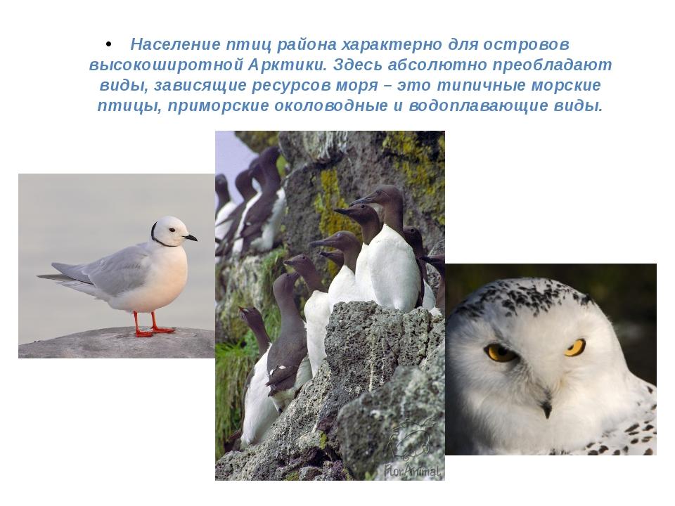 Население птиц района характерно для островов высокоширотной Арктики. Здесь а...