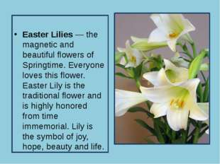 Easter Lilies — the magnetic and beautiful flowers of Springtime. Everyone l