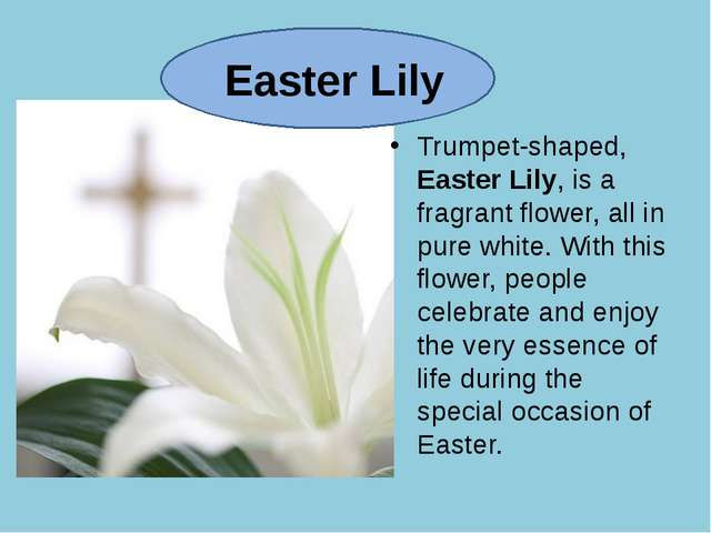 Easter Lily Trumpet-shaped, Easter Lily, is a fragrant flower, all in pure w...